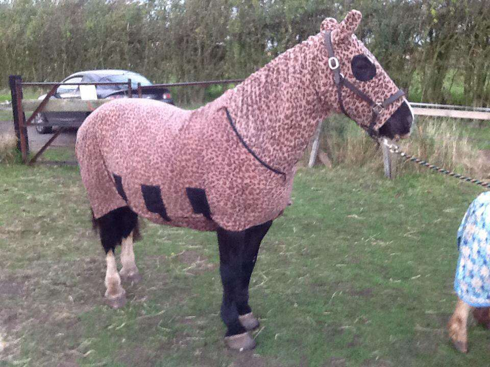 Guinness Kimberley Turner's black cob mare sporting a leopard print number aka the horse onesie a common give away of an equine rug hoarder leopard print, polar fleece horse onesie or horse jim jams