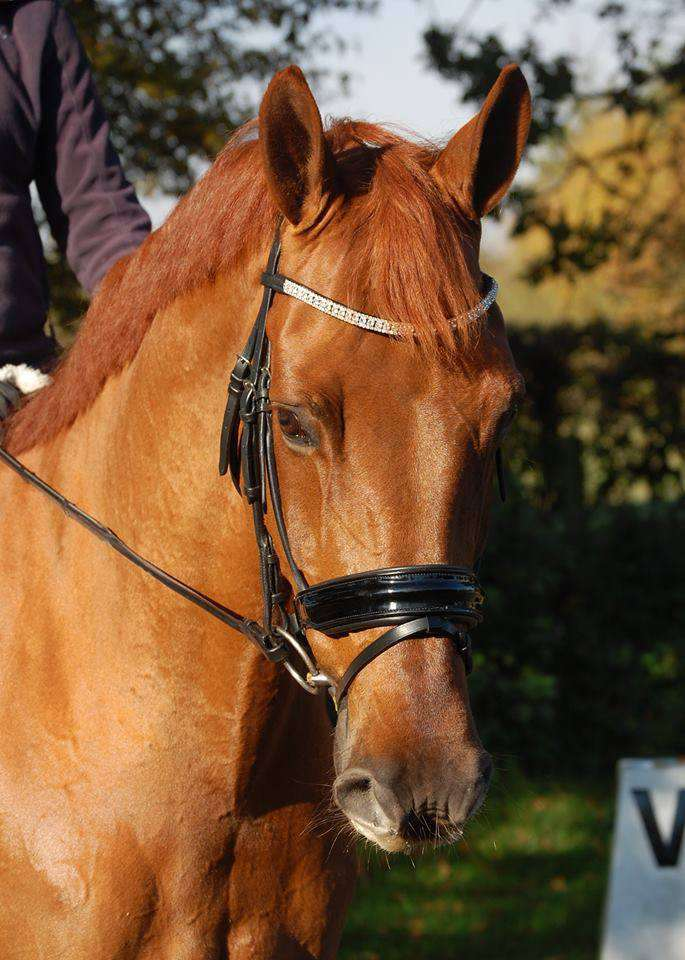 black patent dressage bridle with rolled leather and cut out nose band with crystal browband from CK equine