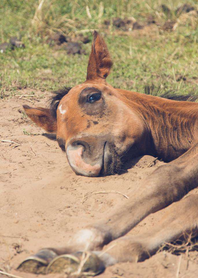 Sleeping foal on the grass photoshoot by Victoria Gray Photography