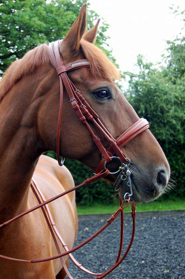 English leather dressage bridle from CK Equine this lovely double bridle in comfort fit design would look perfect on any horse.