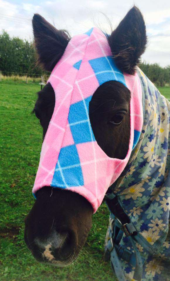 "Tick Tock the minature shetland owned by Kimberley Turner of Hickstead Horse feeds sporting the pink horse hood she ""Needed"""