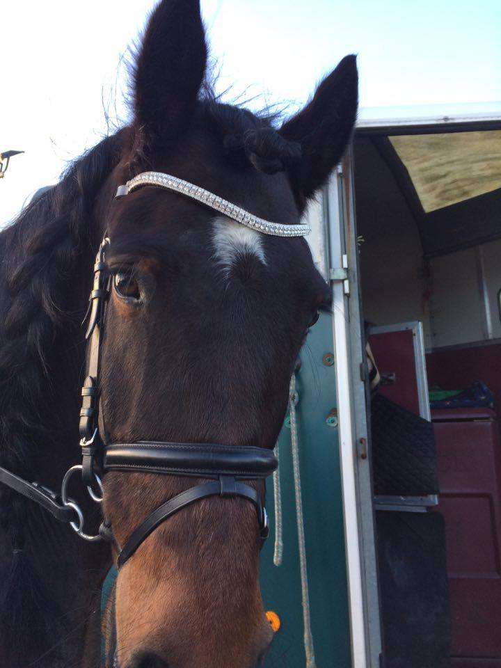 bay horse wearing clear crystal browband from ponycouture triple crown bling browband range