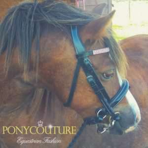 PonyCouture luxury performance pony bridle range coming soon, liver chestnut Welsh section A pony Syfynwy Tegan by Heniarth Quip is the beautiful model for this pony dressage bridle.
