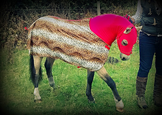 The tiny Alfie Pony in his handmade show rug and hood.