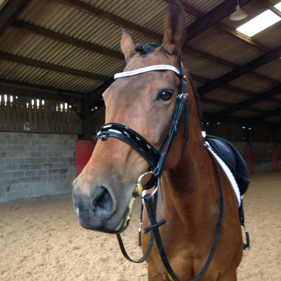 Parker in his Bling Browband by PonyCouture