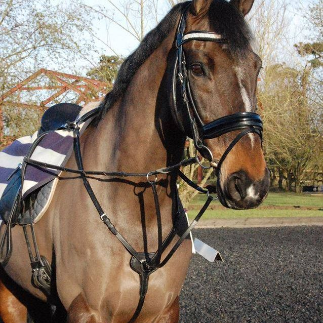 CK Equine make English leather dressage and showjumping bridles, breast plates, eve0tning bridles and more