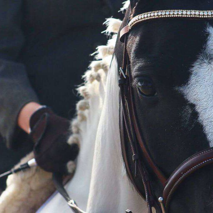 Gorgeous Galaxy in her bespoke Triple Crown crystal browband by PonyCouture